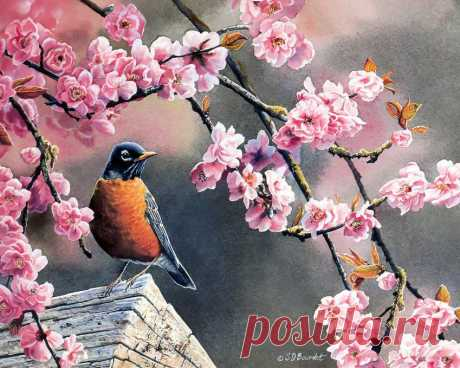 Susan Bourdet. Милые пташки.