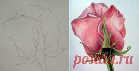 Рисуем розу цветными карандашами — быстро, просто и легко! Роза, наверное, один из самых красивых цветков в мире. И речь идет не только о букете шикарных подаренных роз, даже простой и в тоже время красивый рисунок розы может поднять настроение в самые пасмур…