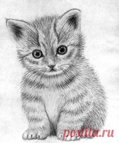 Рисуем маленького котёнка: пошаговый урок — Сделай сам, идеи для творчества - DIY Ideas