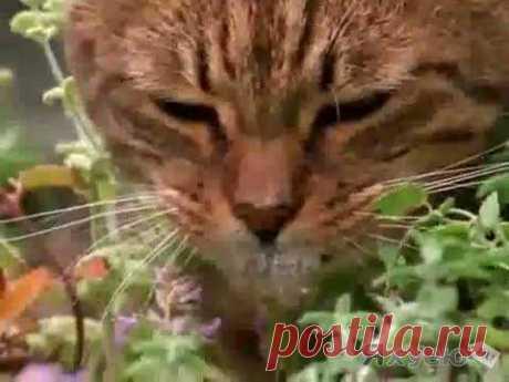 мяты коты: 3 тыс изображений найдено в Яндекс.Картинках