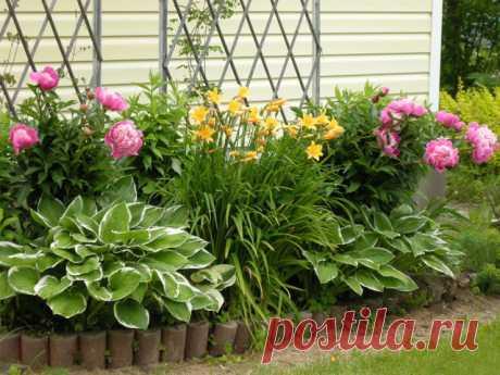 Каталог многолетних цветов для дачи. Фото с названиями