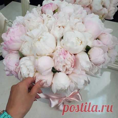 Купить Белые пионы в коробке | Доставка цветов в Москве