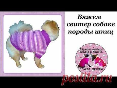 29. Вяжем свитер собаке породы шпиц