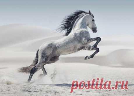 Сила и грация: великолепные лошади на фотографиях Конрада Бонка Лошади – великолепные создания, которых по праву можно назвать величайшим творением природы. Они ещё в древности завоевали сердце человека и сопровождают его уже не первое тысячелетие. Глядя на лошаде...