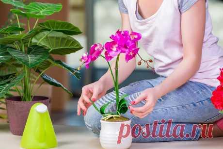 Как приготовить удобрение для орхидеи из картофельной кожуры