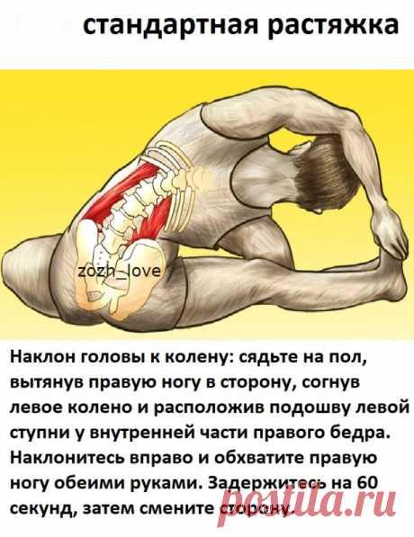 10-минутная растяжка для профилактики болей в спине — Полезные советы