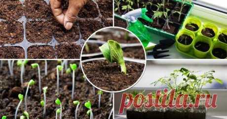 Посев овощей на рассаду: вычисляем оптимальные сроки Залог хорошего урожая овощей – грамотно выращенная рассада. Разбираемся в том, как правильно рассчитать время посева семян, чтобы результат превзошел все ожидания!