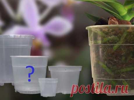 Как выбрать горшки для орхидей