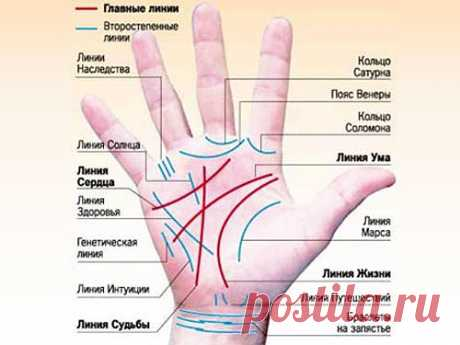 As by lines of a hand to determine signs of financial wellbeing