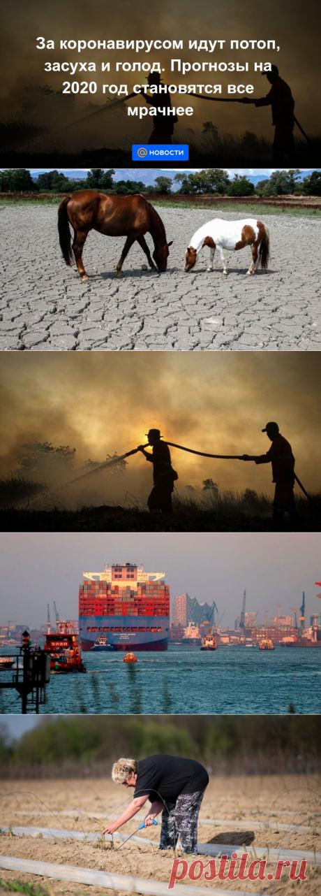 За коронавирусом идут потоп, засуха и голод. Прогнозы на 2020 год становятся все мрачнее - Новости Mail.ru