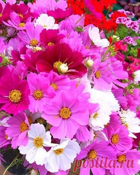 ღРазноцветьем июльским запасайтесь впрок...