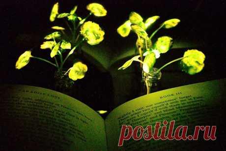 Созданы растения, которые светятся втемноте: видео — National Geographic Россия