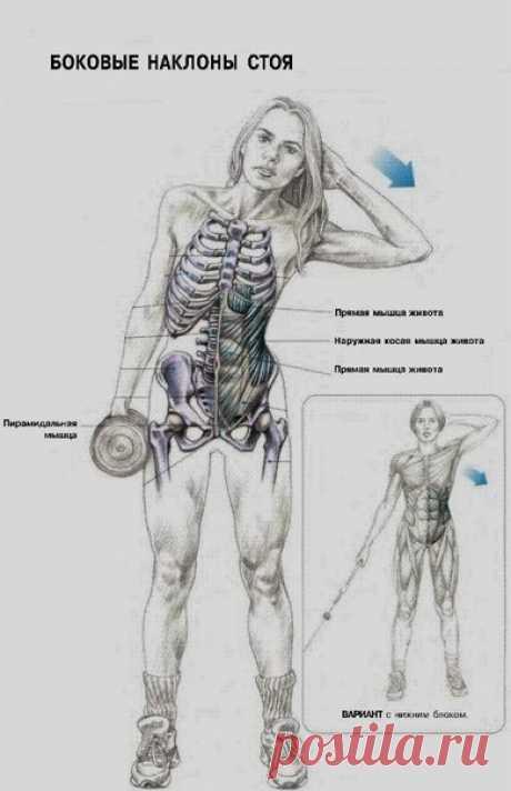Тренируем косые мышцы живота — Мегаздоров