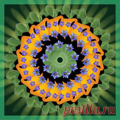 Мандала - хоровод незабудок  Digital Flower Mandala  Free Stock Photo HD - Public Domain Pictures