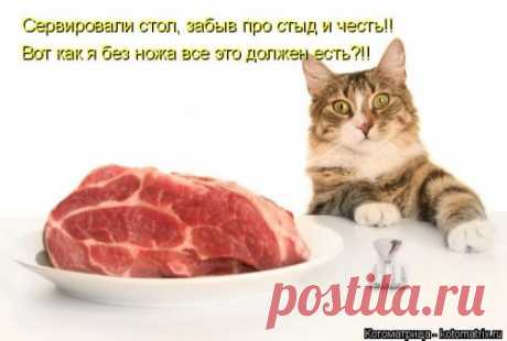 Свежая котоматрица  (27 фото) Еженедельная порция позитива и прикольных картинок с очаровательными котейками, которые подарят вам несколько приятных минут просмотра!
