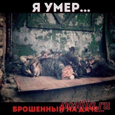 ЭТО ОЧЕНЬ ВАЖНО!!! Не бросайте животных на дачах! Из тысяч брошенных в деревнях и на дачах животных, к концу зимы выживают единицы. Не нужны они вам, найдите тех, кому они будут нужны! Разместите объявления, сделайте все возможное, чтобы спасти их от мучительной смерти!!! Каждой осенью отмечают резкое увеличение кол-ва бездомных животных. Их ряды пополняют животные, которых дачники бросают на произвол судьбы, уезжая на зиму в теплые квартиры. Представьте: загородный участо...