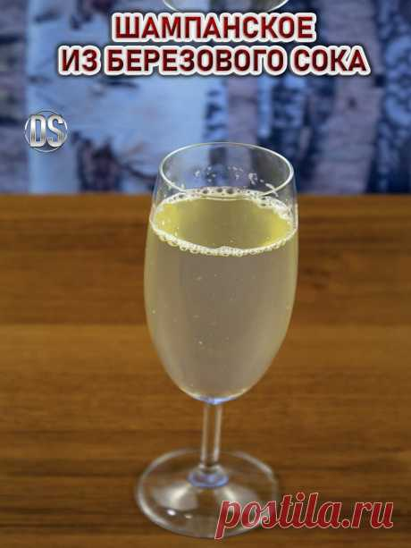 Шампанское из березового сока (рецепт)    Сделать шампанское из березового сока можно в любое время года. Подойдет любой свежий или законсервированный сок, главное чтобы он был не прокисшим.