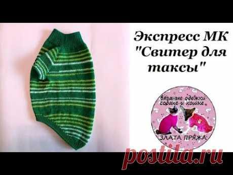 Экспресс МК Свитер для таксы