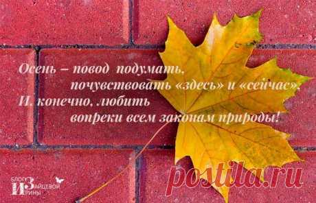 Душевные красивые стихи про осень   Блог Ирины Зайцевой