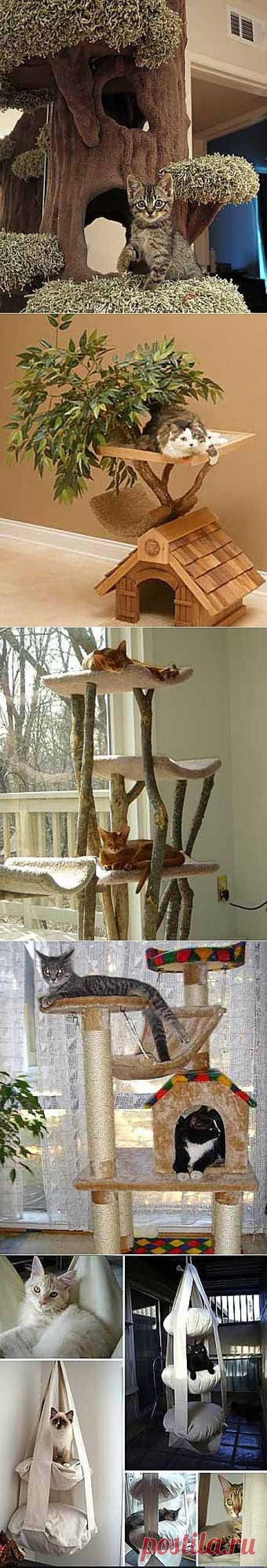 Идеи домиков для вашей кошки! Кошка в доме!.
