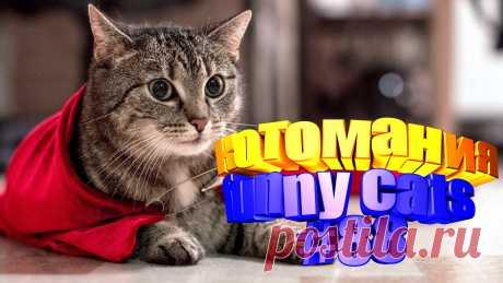 видео смешные коты, смешные видео котов, видео котов смешное, смешное видео котов, видео с котами, коты видео, коты воители видео, для кота видео, видео кота, смешные животные, животное смешное, смешное про животных, видео смешное животных, смешных животных, коты приколы, прикол котов, приколы котами, кошки видео смешное, кошки смешные видео, смешные кошки видео, видео кошек смешное, про кошек смешных, смешное видео кошка, смешное кошка видео, смешно про кошек, кошек смешные, видео кошек