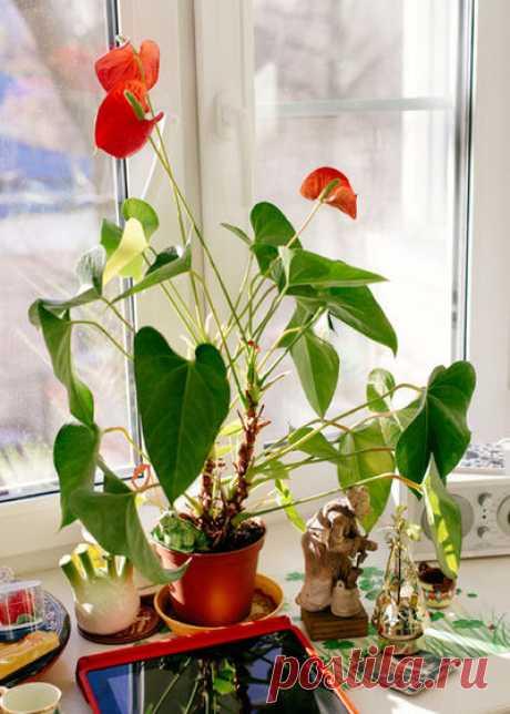 На кухне огород, а в ванной орхидея… Выбираем растения в каждую комнату!