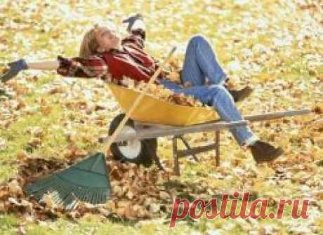 Осенние работы в саду и на огороде на даче: 8 наиболее важных мероприятий