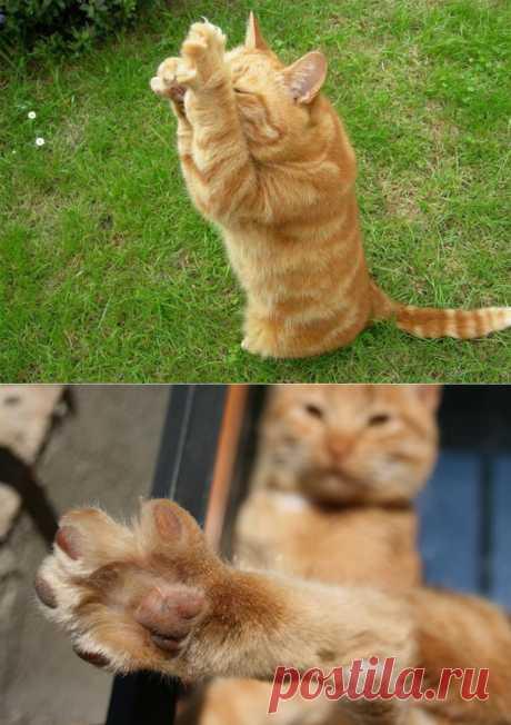 25 вещей, которые кошки делают, как люди | Живой фотоблог
