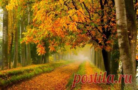 Стихи про осень и любовь современные :