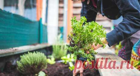 Органические удобрения для сада своими руками: как их приготовить Скорее всего в этом году свой отпуск мы проведем на даче. Рассказываем о том, из чего можно сделать органическое удобрение для огорода. Метод очень прост, он поможет вам вырастить экологические безопасные овощи, используя то, что есть под рукой на каждом садовом участке. Правильный компост. Весна – лучшее время для того чтобы заложить компост.