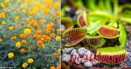 12 растений, способных защитить вас от клещей Натуральная оборона жилища.