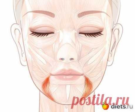 (169) Поднимаем уголки губ: упражнение «Улыбка»: Фейскультура: методы естественного омоложения: Группы - diets.ru | уход за собой