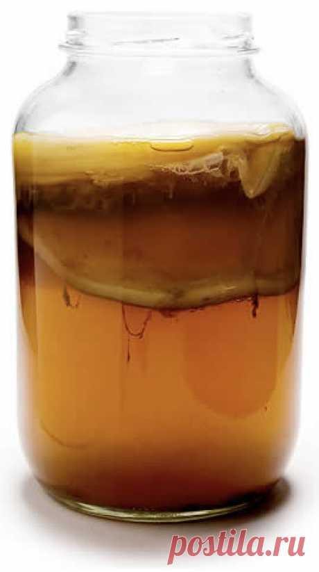 Старинное средство от всех болезней - чайный гриб