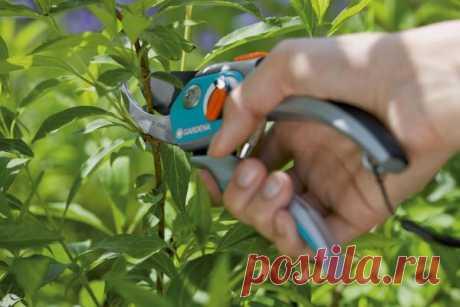 Обрезка декоративных деревьев и кустарников (видео)