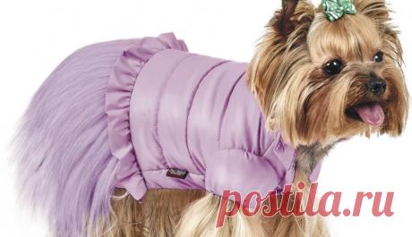Как выбрать одежду для своей собаки – БУДЬ В ТЕМЕ