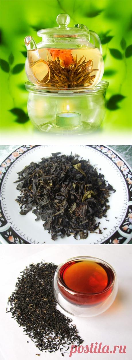 Виды чая и их свойства - какой чай самый полезный и вкусный?