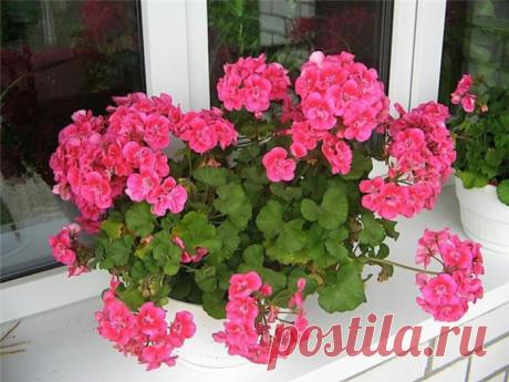 Популярные комнатные цветы: описание с фотографиями