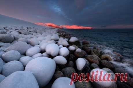 «Клюква в сахаре». Баренцево море. Кольский полуостров. Фотограф – Максим Евдокимов: nat-geo.ru/photo/user/113899/