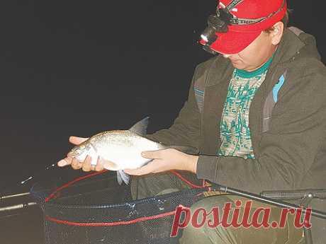 Особенности ночной ловли леща Тема ловли леща в настоящее время пользуется огромной популярностью среди рыболовов. Провести теплый летний денек на водоеме, получить серию поклевок и