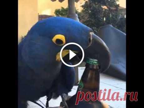 Bird Opens Beer Bottle with Beak