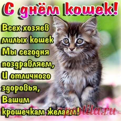 8 августа Международный день кошек!