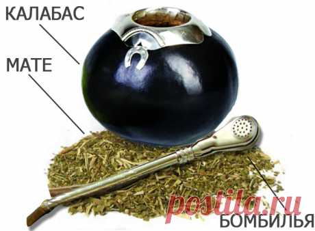 Парагвайское чудо для похудения! Чай мате — Худеем вместе