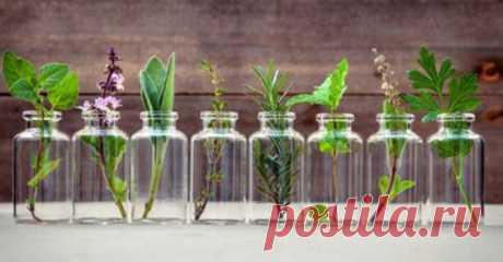 Эти травы вы можете вырастить в стакане с водой круглый год... Выращивать зелень на подоконнике можно круглый год, и для этого вовсе не нужно запасаться горшками с землей.