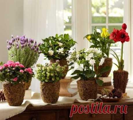 После этой подкормки подоконник постоянно в цветах!  Практически в каждом доме есть хотя бы одно комнатное растение, очень уж хочется видеть свежую зелень долгими зимними вечерами. Однако, если вы хотите увидеть еще и цветы на ваших горшечных культурах…