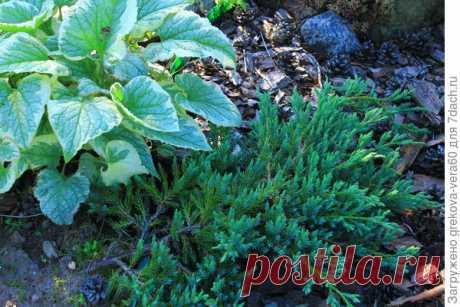 Хотите научиться самостоятельно выращивать саженцы декоративных растений? Тогда Вам сюда!