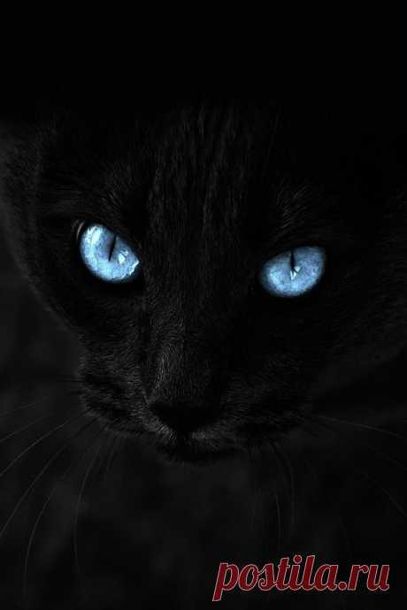 Голубые глазки!