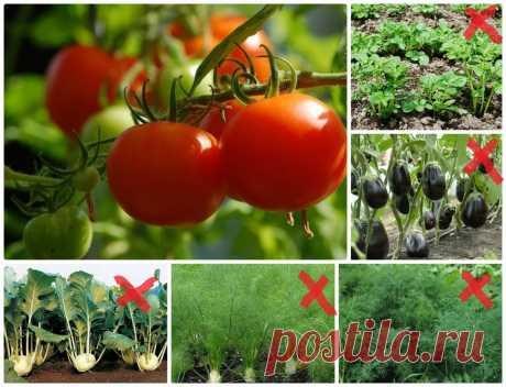 Что можно и что нельзя сажать рядом с томатами | Садовичок | Яндекс Дзен
