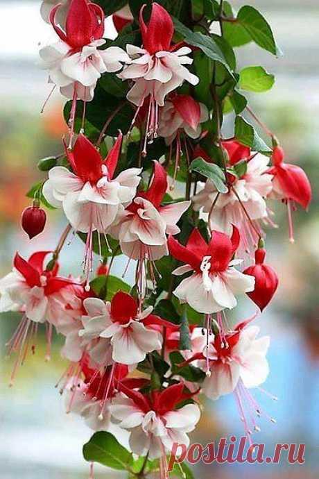 Вальс  цветов.