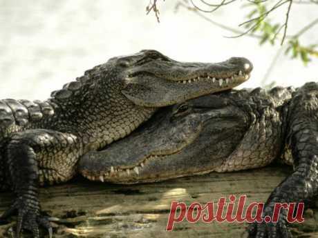 Обитатели Крокодилового пруда – хранители судеб жителей деревни Сабу. А еще их (крокодилов, не жителей) могут без особой опаски гладить туристы.