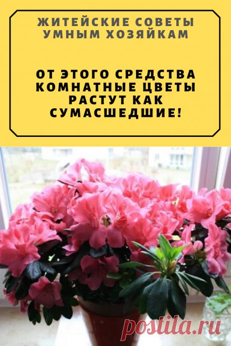 От Этого Средства Комнатные Цветы Растут Как Сумасшедшие! | Житейские Советы